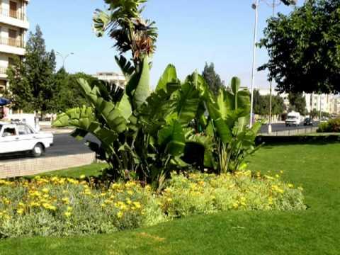 Parc de Berrechid, Maroc.wmv