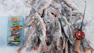 Рыбинка. Окуневое эльдорадо. Леонидыч на рыбалке #3