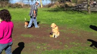 Dog Training Class For Reactive Dogs Lake Temescal Oakland, Ca