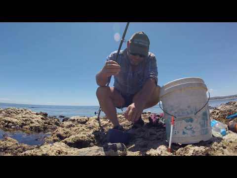 How To Catch Garfish With Flavoured Maggots - Fleurieu Peninsula, South Australia