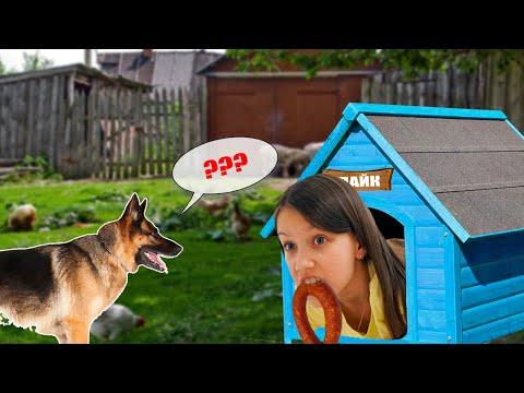 Прятки с Собакой Лайком В Деревне у Бабушки / Вики Шоу