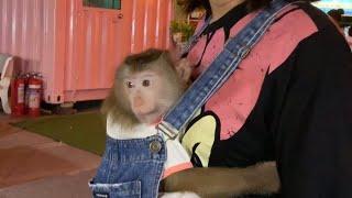 Monkey Baby Nui | Nui go amusement park