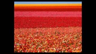 Красивые цветы(Доставка цветов в Самаре