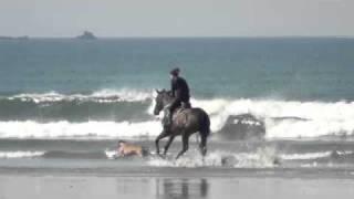 Quinine plage Plouharnel 2011