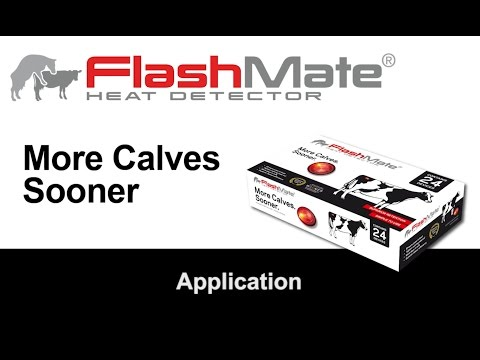 FlashMate Application