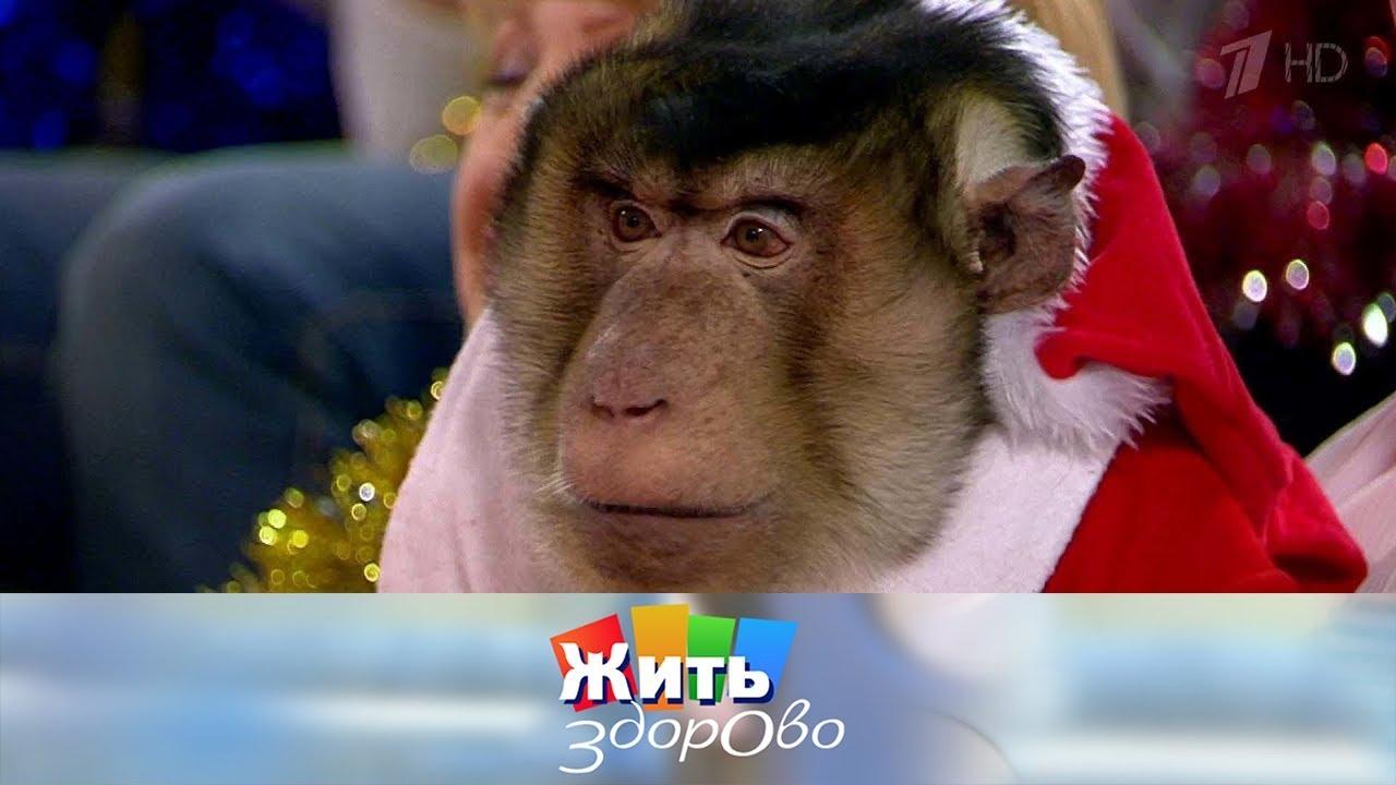 жить здорово про обезьян
