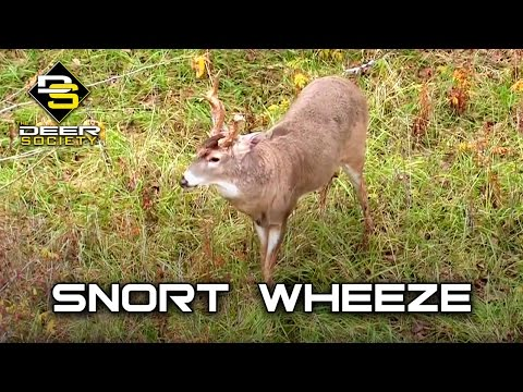 Deer Calling Tip - Snort Wheeze