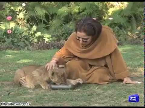 Babra Sharif adopts tiger cub