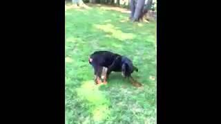 Video Of Adoptable Pet Named Maverick