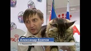 Сюжет 05 09 16 Всемирная выставка кошек в Ессентуках