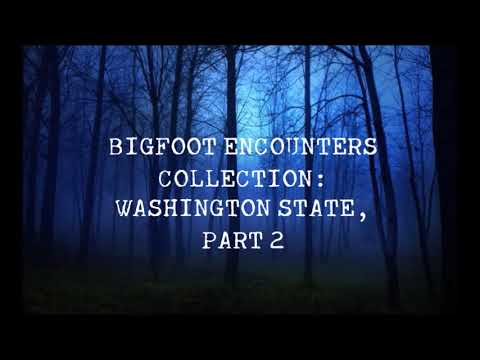 2 LARGE BIGFOOT FIGHTING OVER A DEER! BIGFOOT ENCOUNTERS COLLECTION: WASHINGTON STATE P.2