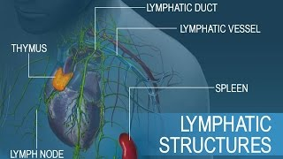 Anatomy and Physiology of Lymphatic System