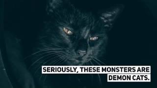 Top 3 Freakiest Black Cat GIFs You'll Find on the Dark Web