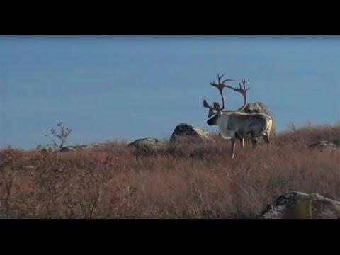 Magnum TV S6:E13 Quebec Caribou
