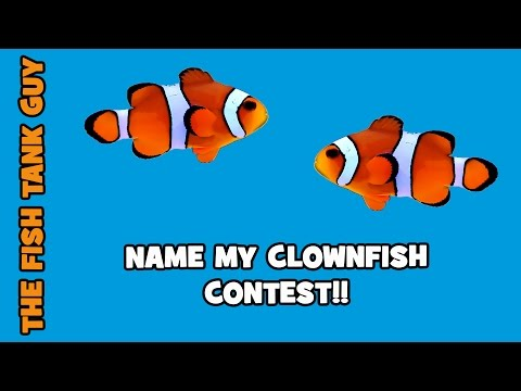 The Fish Tank Guy - Contest - NAME MY CLOWNFISH!