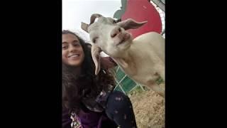 Celebrando de ser vegana por 7 años