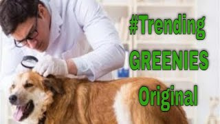 Trending GREENIES Original Dog Dental Care Chews || Dental Products For Dogs & Cats