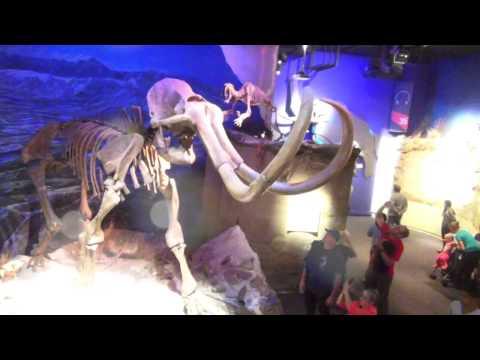 Royal Tyrrell Museum - Dinosaur