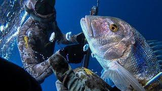 Spearfishing Dentex the Golden Queen - Ψαροντούφεκο Συναγρίδα η Χρυσή βασίλισσα  ✔