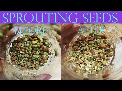 How Sprouting Seeds, Grains and Beans Rocked My World