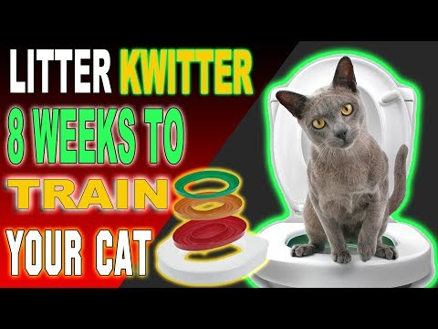 How To Potty Train Your Cat - Toilet Train Your Cat in 6 Weeks