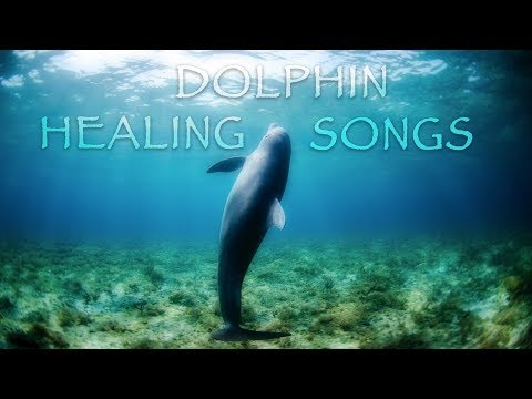 Healing Music and Songs of Dolphins | Anxiety and stress relief