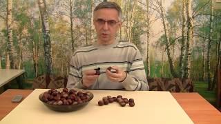 видео Как вырастить каштан из ореха в домашних условиях?