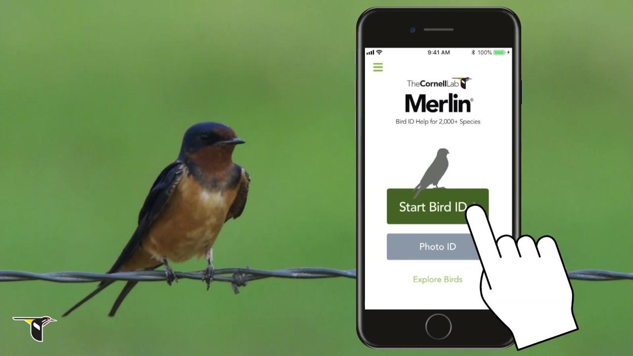 Explore Merlin Bird ID App - eBird Essentials