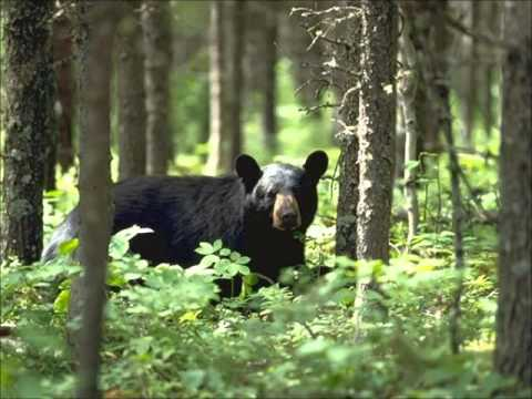History Slam Podcast Episode Forty-Six: Ontario's Spring Bear Hunt
