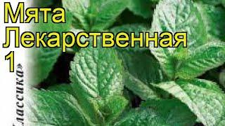Мята Лекарственная 1 (Мята). Краткий обзор, описание характеристик, где купить méntha