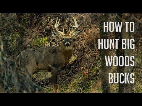 How To Hunt Deer In The Woods