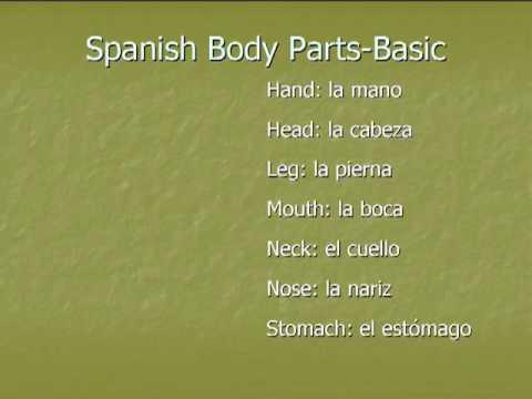 Spanish Vocabulary: Body Parts