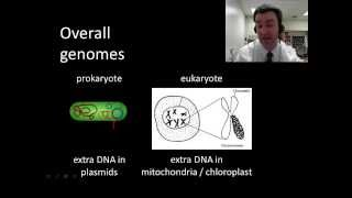 Prokaryotic vs. eukaryotic genomes