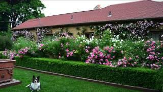 Живая изгородь(Видео-блог о дизайне, архитектуре и стиле. Идеи для тех кто обустраивает свой дом, квартиру, дачу, садовый..., 2013-09-16T15:17:29.000Z)