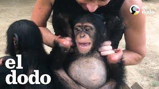 Esta mujer hace lo que sea para salvarle la vida a este chimpancé