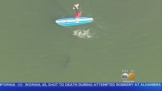 Portion Of Seal Beach Reopens After Paddleboarder's Close Call With Great White Shark