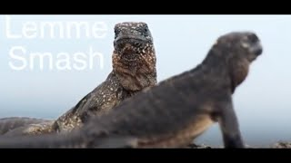 BEST OF LEMME SMASH VIDEOS (Compilation) #9