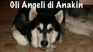 GLI ANGELI DI ANAKIN