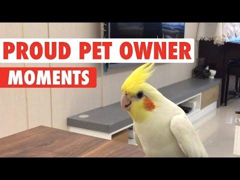 Proud Pet Owner Moments