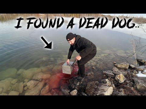 MAGNET FISHING On A FROZEN LAKE GONE WRONG FOUND DECAPITATED DOG (COPS CALLED)