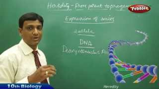 Heredity  AP & TS Class 10th State Board Syllabus Biology