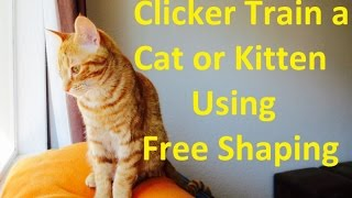 How to Clicker Train a Cat or Kitten Using Free Shaping