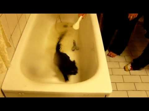 Cat hates the Bath – Funny cat fail – Cat wont get washed