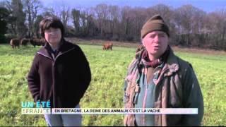 ANIMAUX : En Bretagne, la reine des animaux c'est la vache