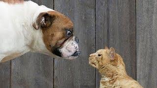 Забавные отношения между кошками и собаками  Приколы с кошками и собаками  Funny cats and dogs