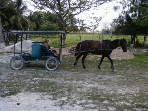 Shipyard Belize Mennoniten 2011.wmv
