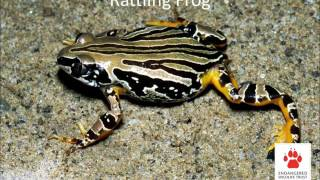 Frogs and their calls