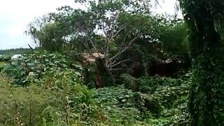 Cihuatlán, Jal Barrio de la Teco en peligro de extinsión