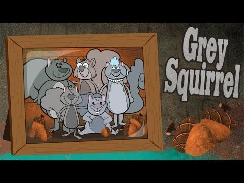 Grey Squirrel Song - Autumn Songs for Children - Kids Songs by The Learning Station
