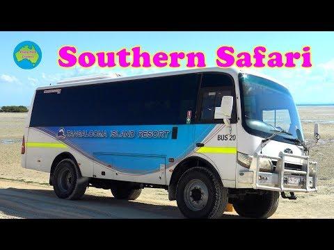 Tangalooma Tour Southern Safari ...2019 - Brisbane Australia .
